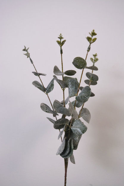 Slika Eukaliptus 59 cm