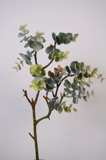 Slika Grana 43 cm