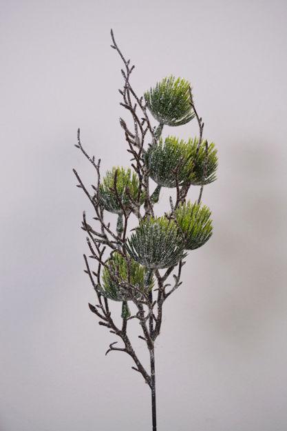 Slika Grana bora 50cm