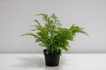 Slika Zelenilo u posudi 25 cm