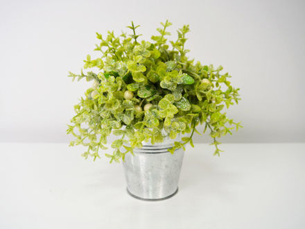 Slika Dekorativno zelenilo u posudi 21 cm