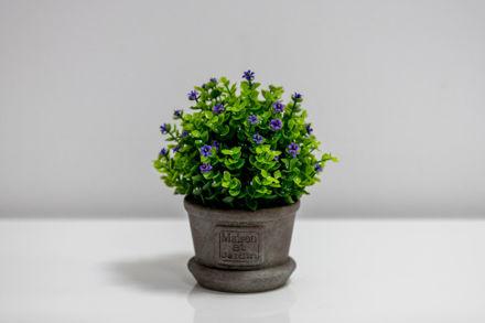Slika Dekorativno cvijeće u posudi sa natpisom 20 cm