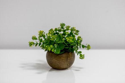 Slika Dekorativno cvijeće u posudi 15 cm