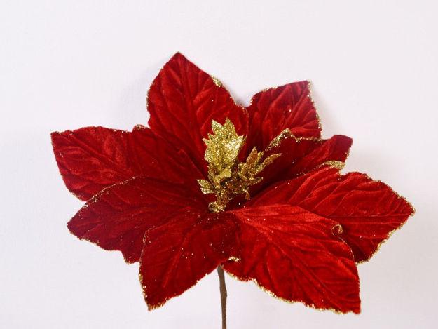Slika Božićna zvijezda sa zlatnim rubom pik 15 cm