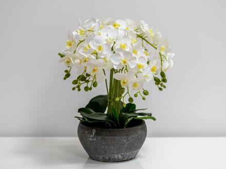 Slika PONOVNO U PONUDI! Orhideja u ukrasnoj posudi 45 cm