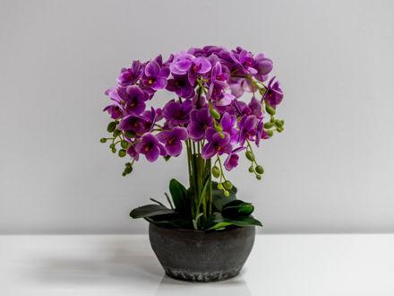 Slika PONOVNO U PONUDI ! Orhideja u ukrasnoj posudi 45 cm