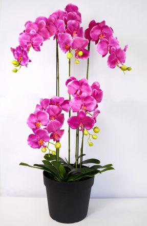 Slika Orhideja s korijenom 115 cm