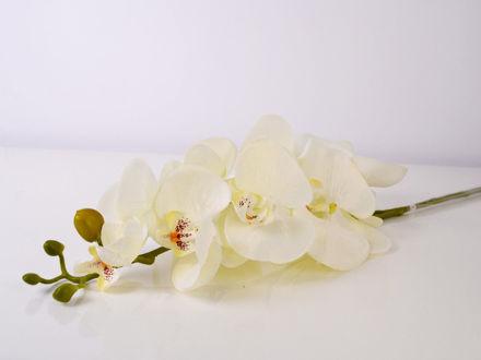 Slika Grana orhideja 85 cm