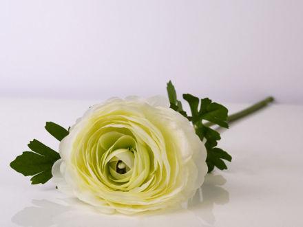 Slika Grana ranunkula 55 cm