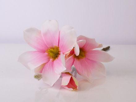 Slika Grana magnolija 40 cm