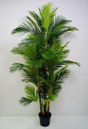 Slika Palma u posudi 200 cm