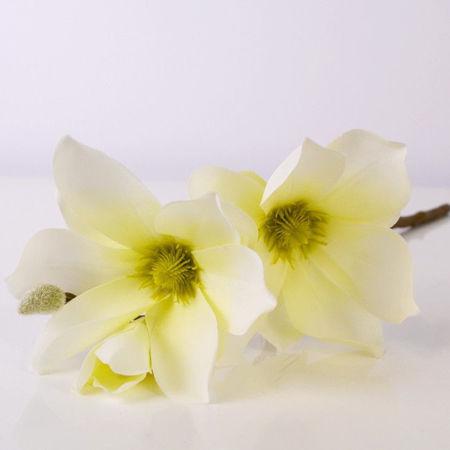Slika za kategoriju Rezano cvijeće i grane