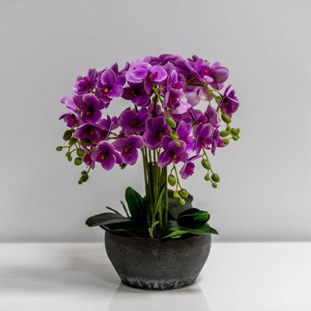 Slika za kategoriju Dekorativno cvijeće i zelenilo u posudi