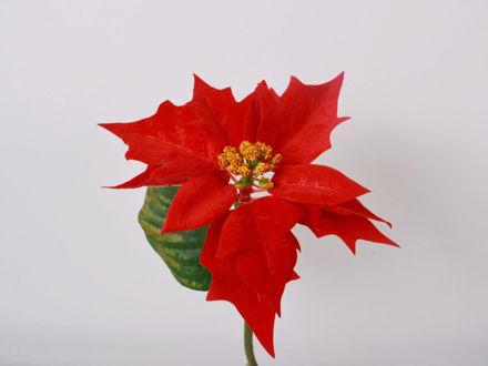 Slika Božićna zvijezda pik 24 cm
