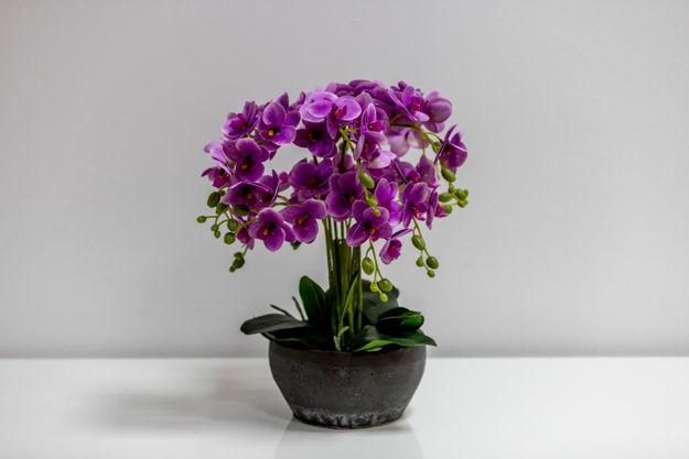 Slika Orhideja u ukrasnoj posudi 45 cm