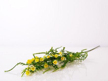 Slika Poljsko cvijeće 63 cm