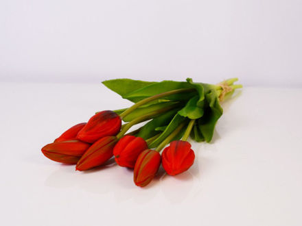 Slika Buket tulipana 40 cm