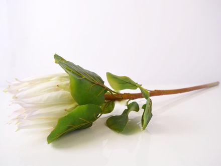 Slika Protea 68 cm