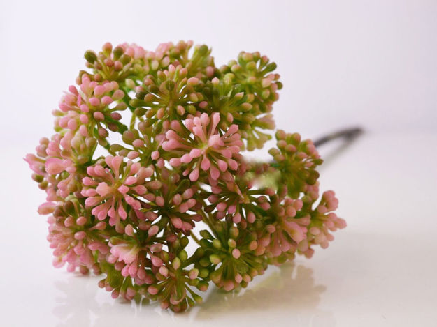 Slika Cvijet aglia odorata 55 cm