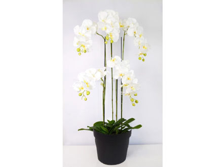 Orhideja u posudi 115 cm