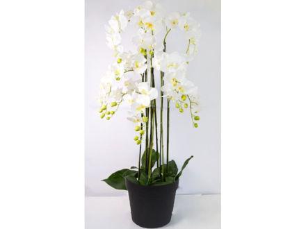Orhideja u posudi 120 cm