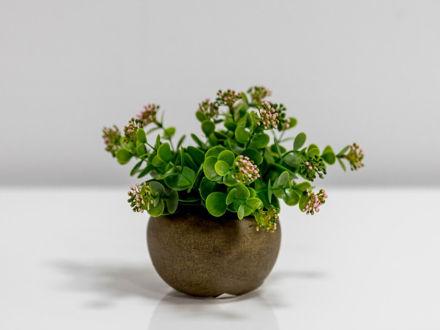 Cvijeće u posudi 15 cm
