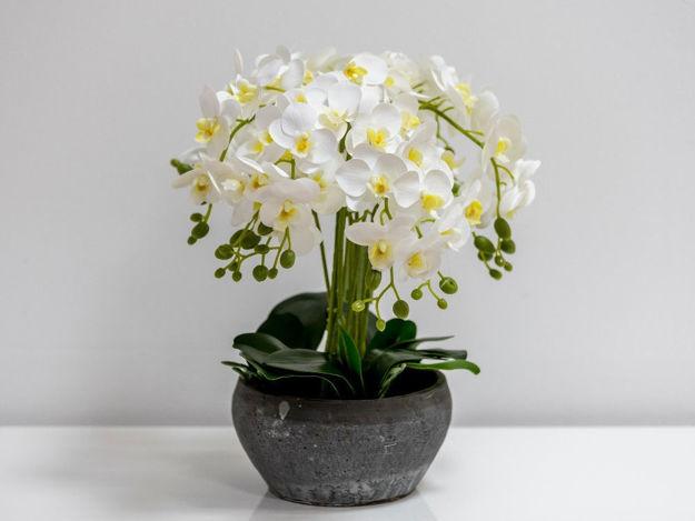 Orhideja u posudi 01
