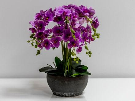 Orhideja u posudi 02