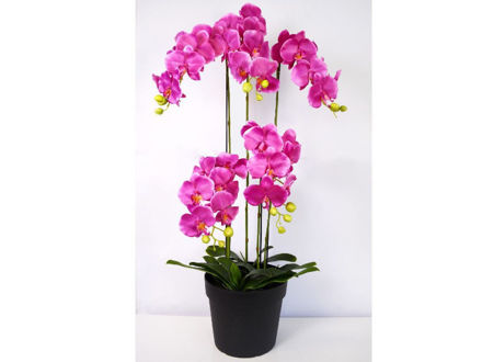 Orhideja u posudi 115 cm 01