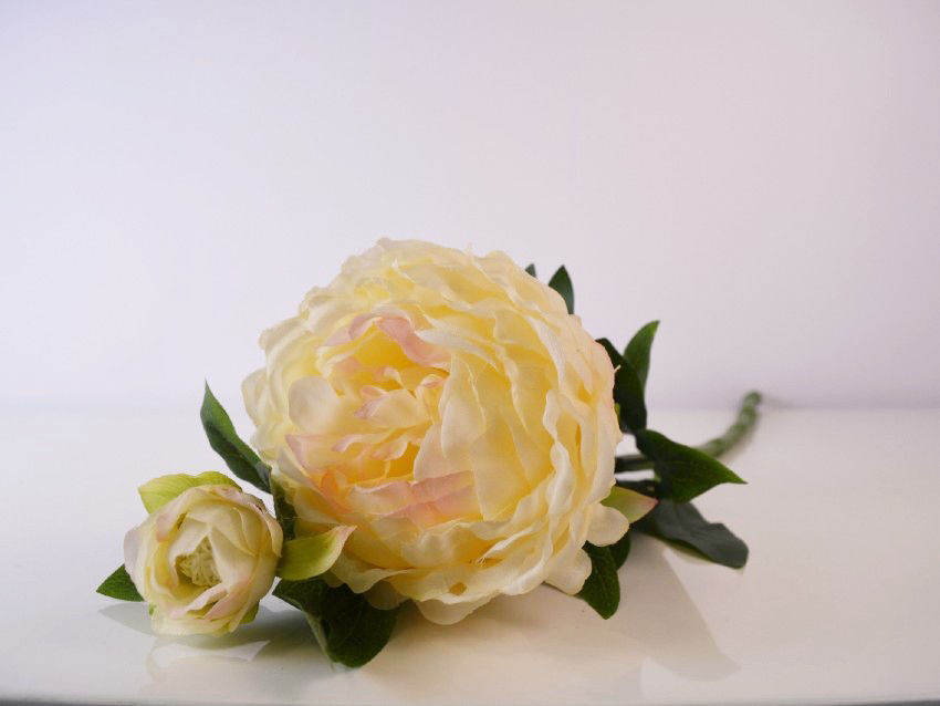 Bijela/Svijetlo roza