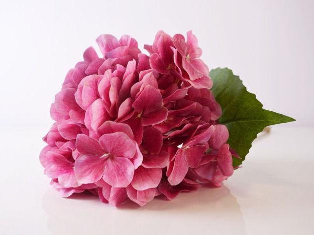 Umjetna hortenzija