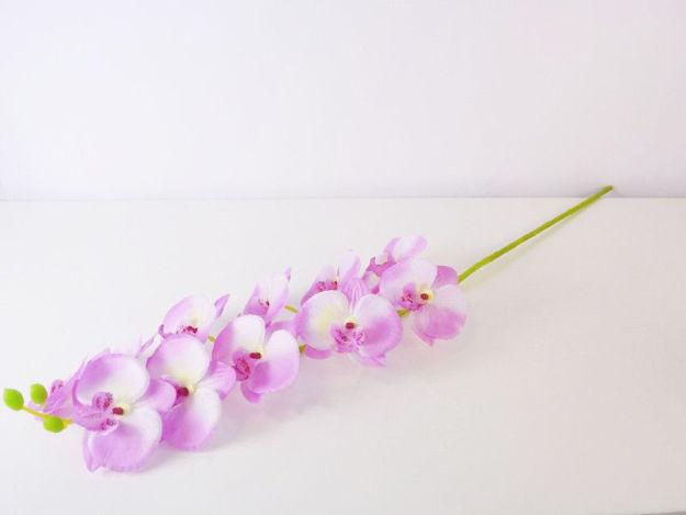 Slika Orhideja 80 cm
