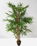Slika Bambus u posudi 180 cm