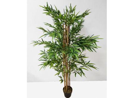 Bambus u posudi 180 cm