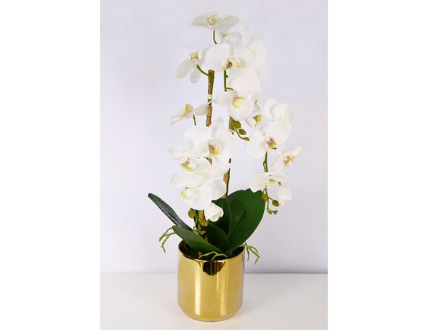 Slika Orhideja u posudi 80 cm